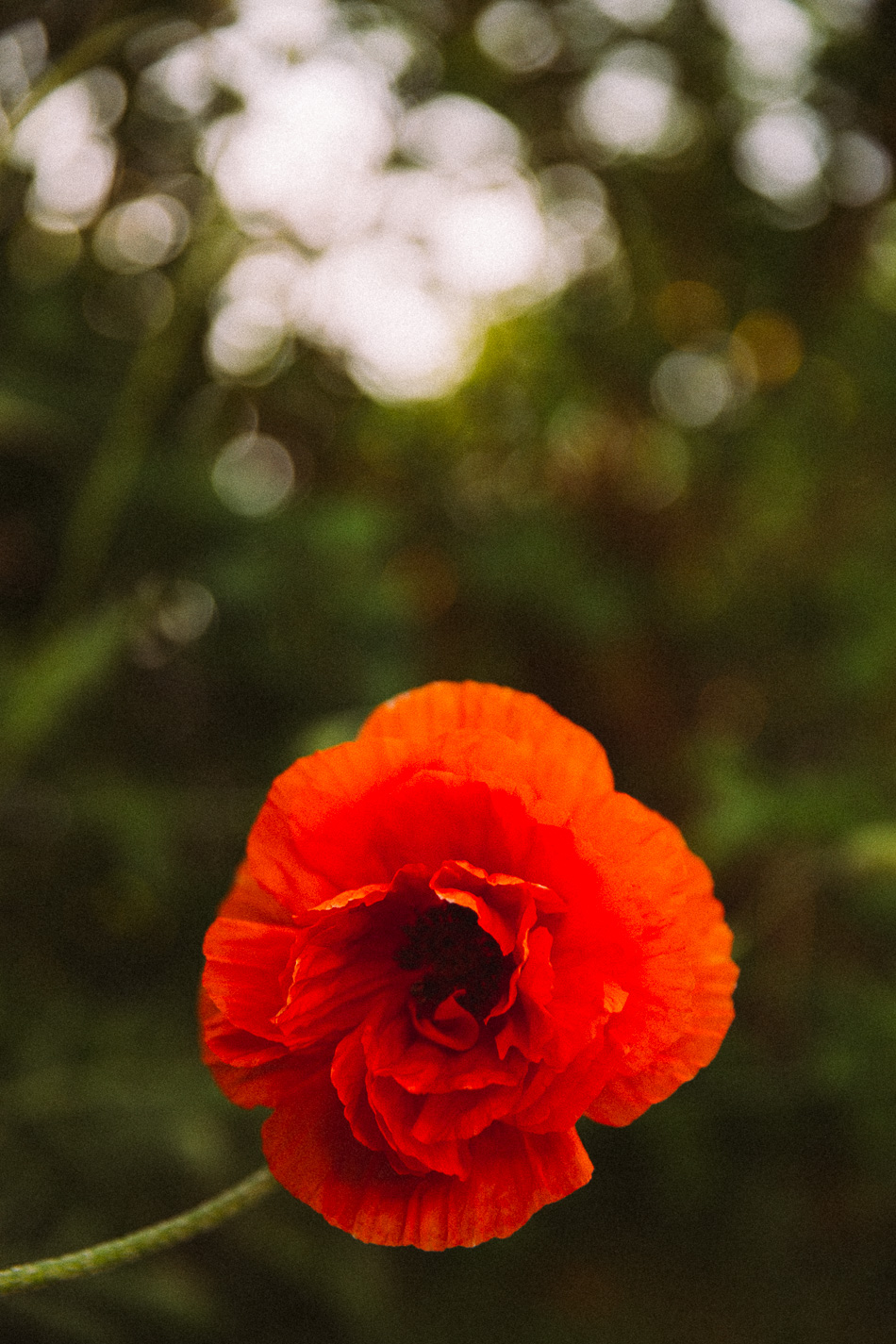 poppies // livelovesimple.com