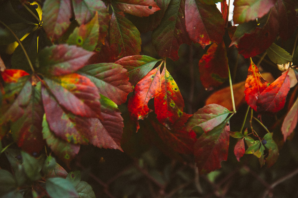 Marina Grace in Autumn // livelovesimple.com