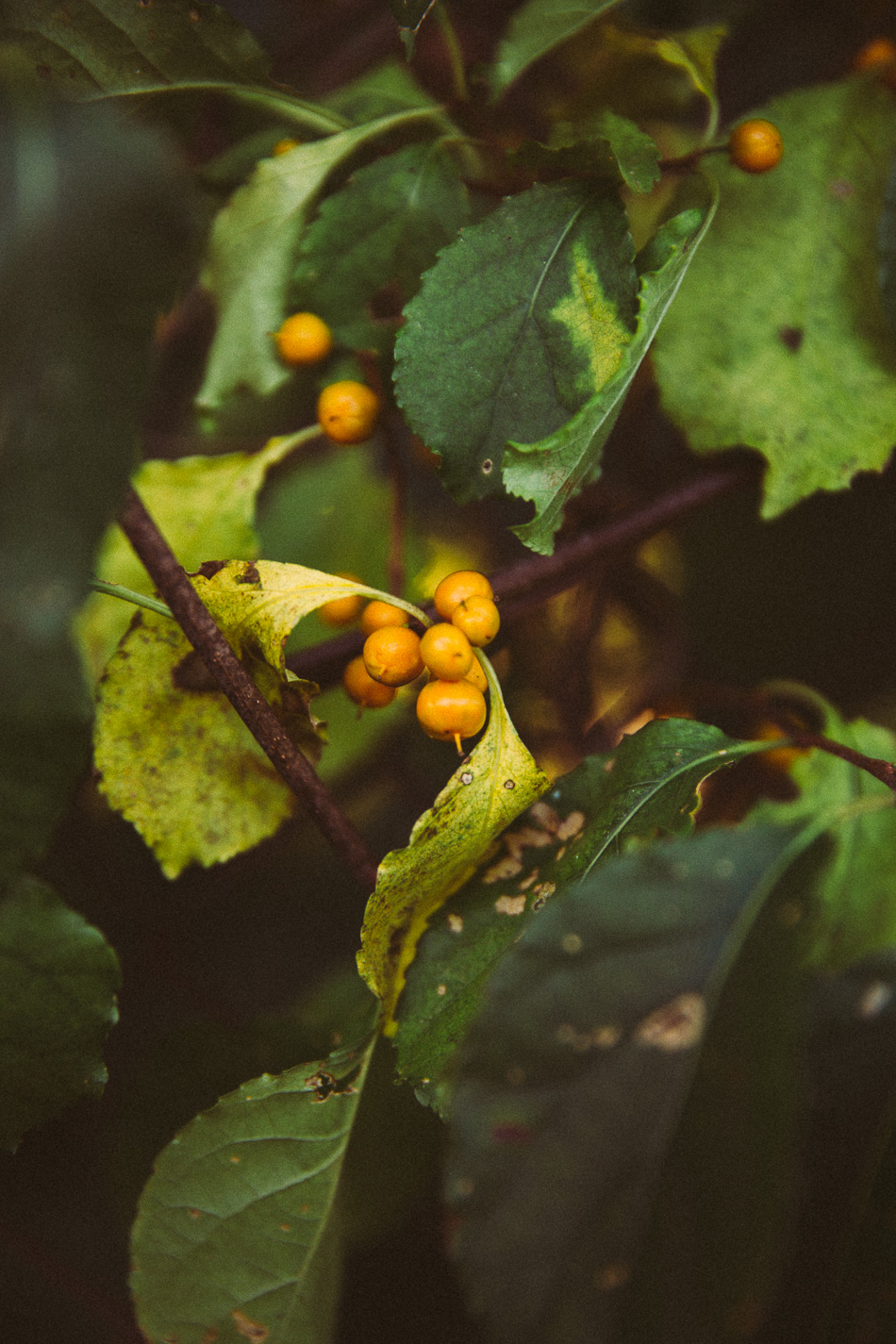autumn // livelovesimple.com