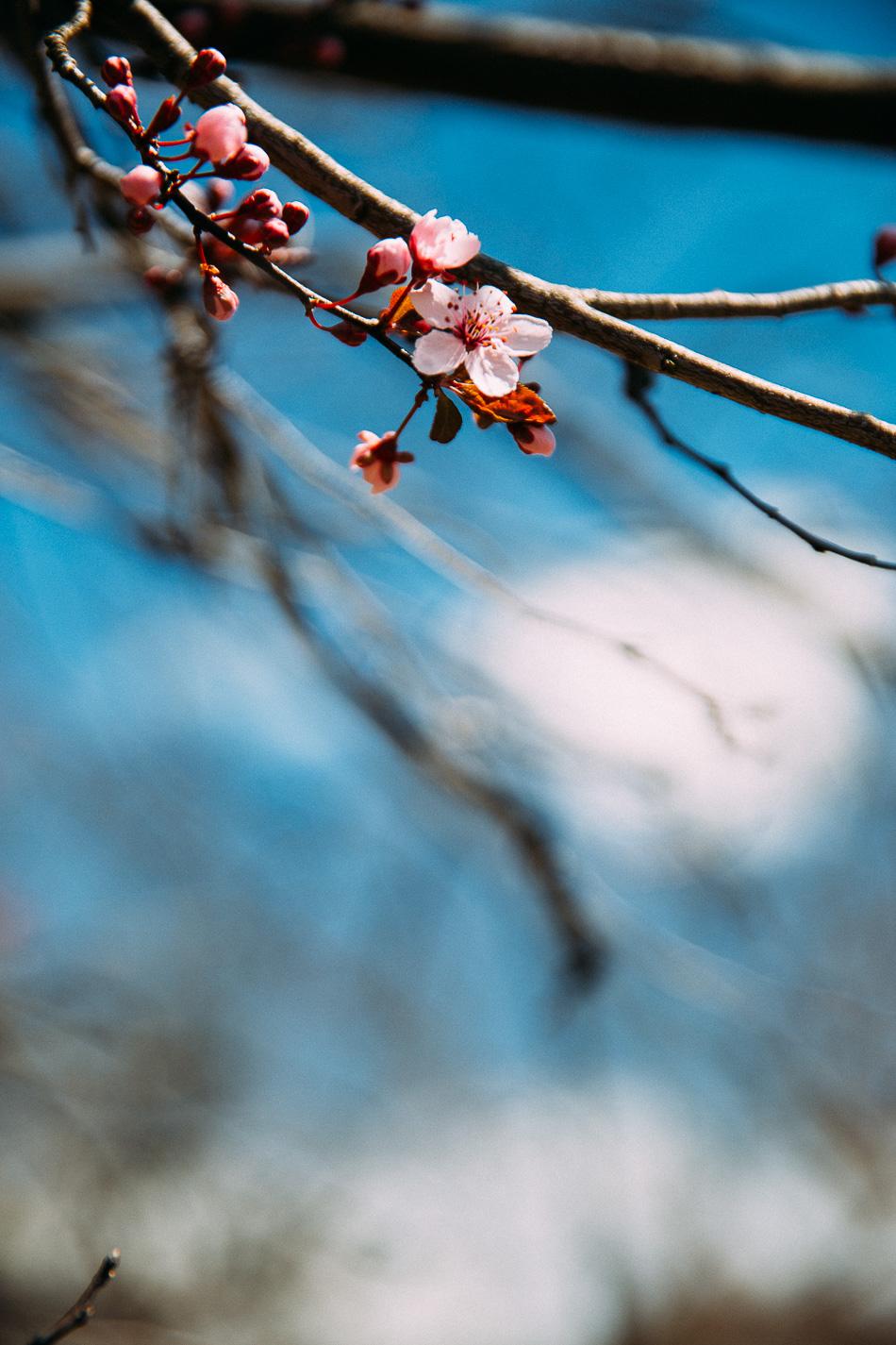 a spring walk (finally!)