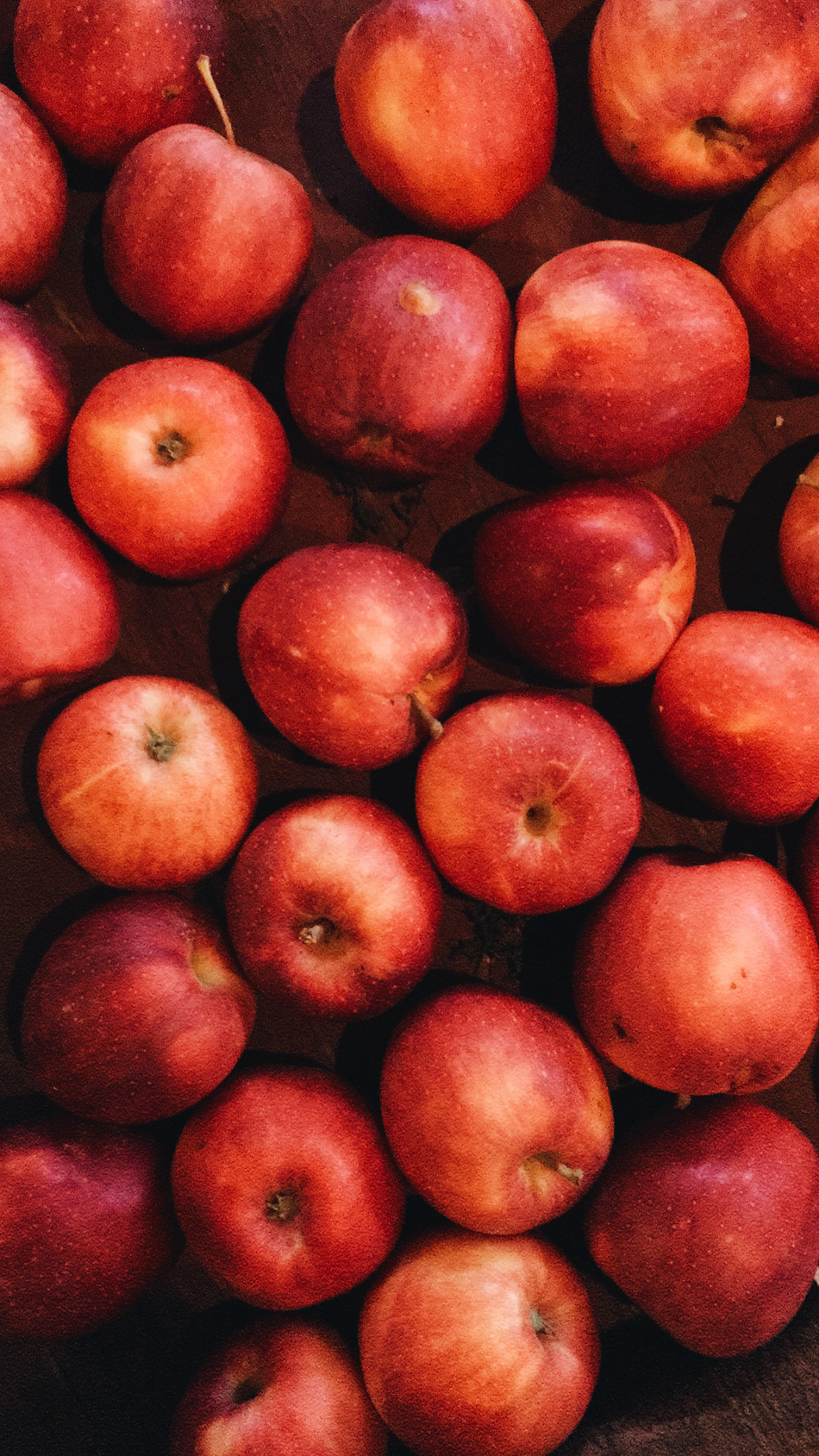 apple picking // livelovesimple.com