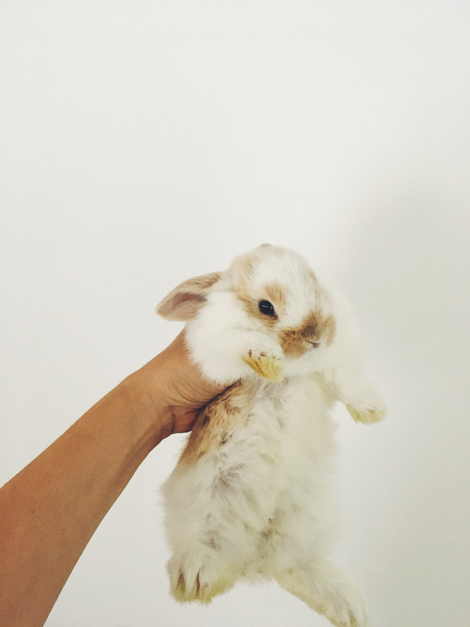 bunnies // livelovesimple.com