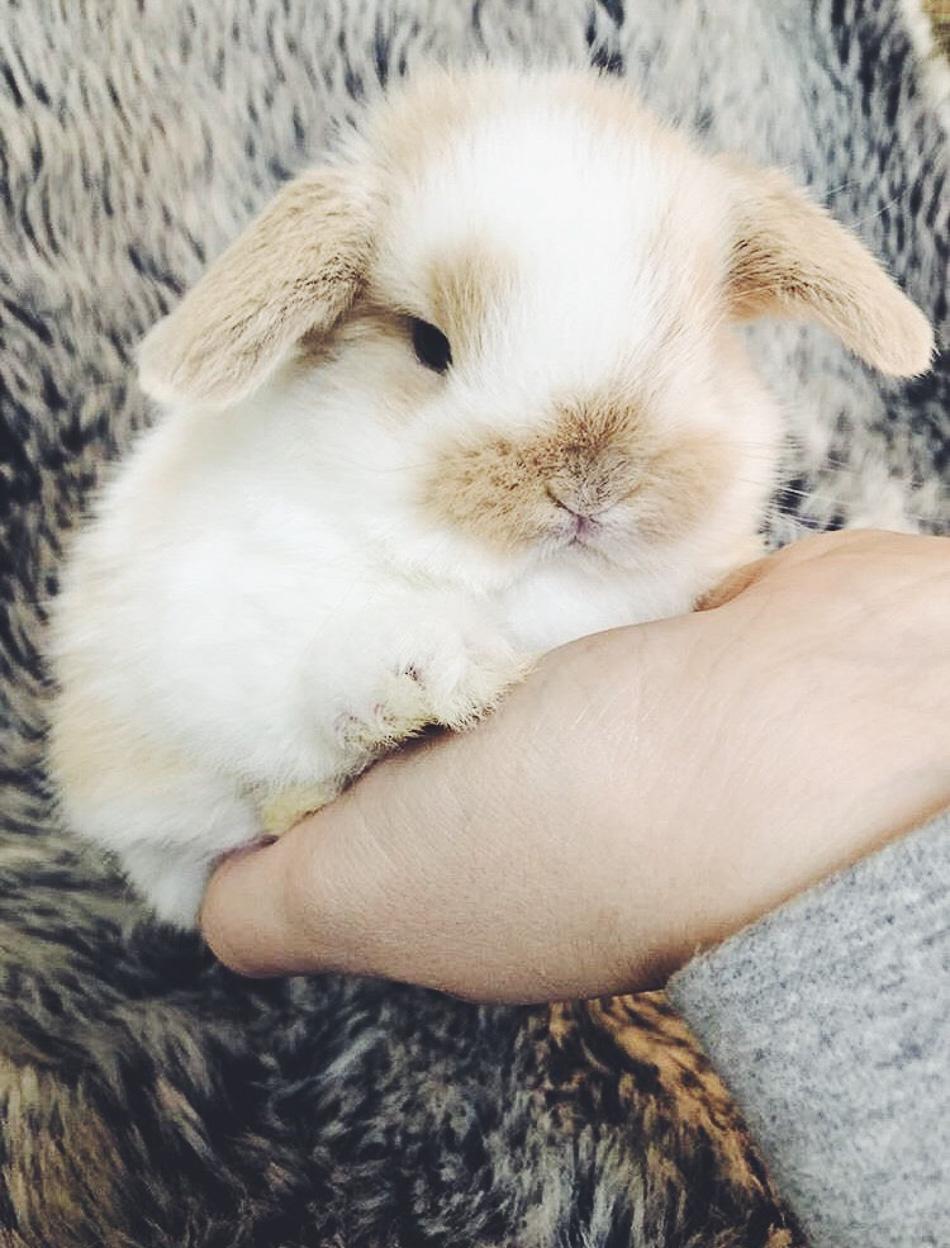 bunnies // livelovesimple.com