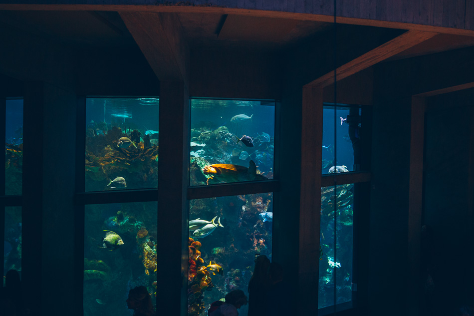 New England Aquarium // livelovesimple.com