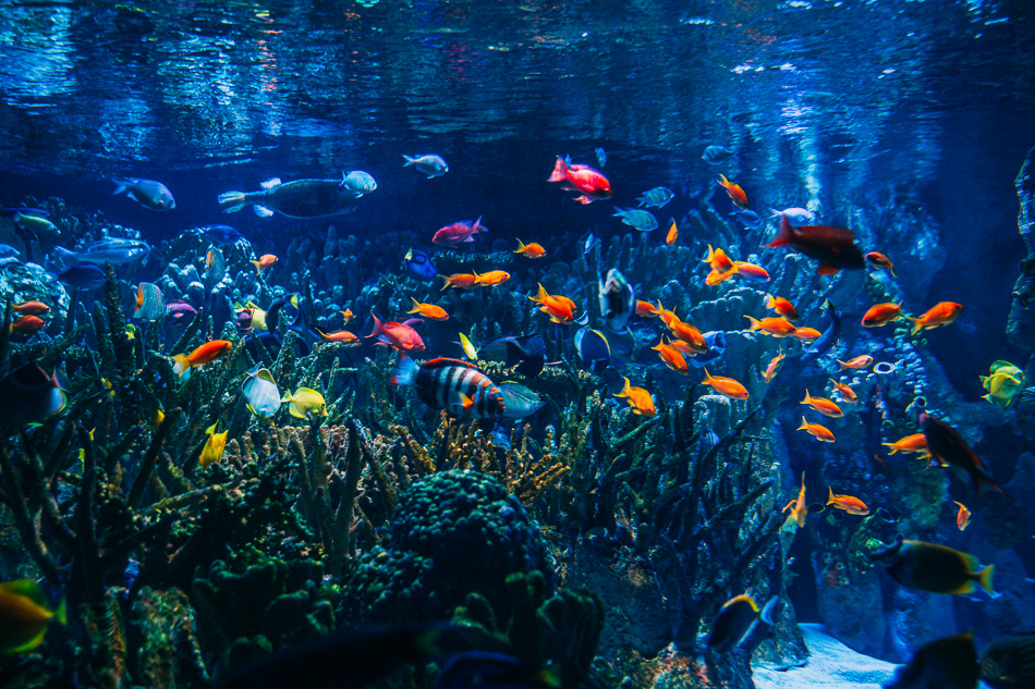 New England Aquarium // livelovesimple.com