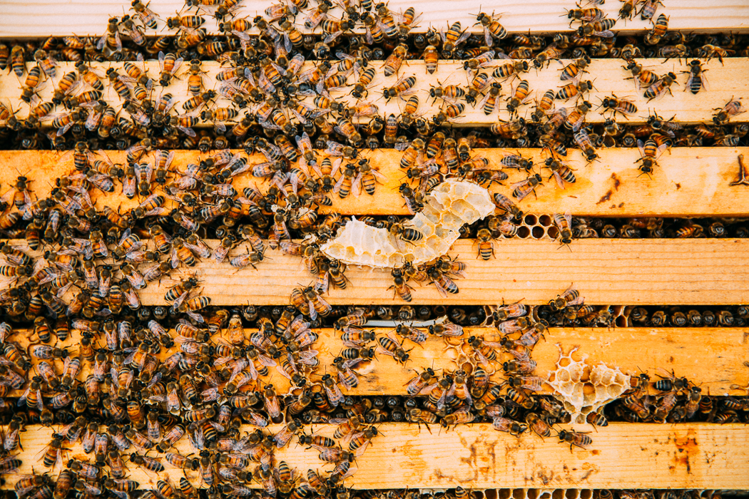 honey bees + financial dreams